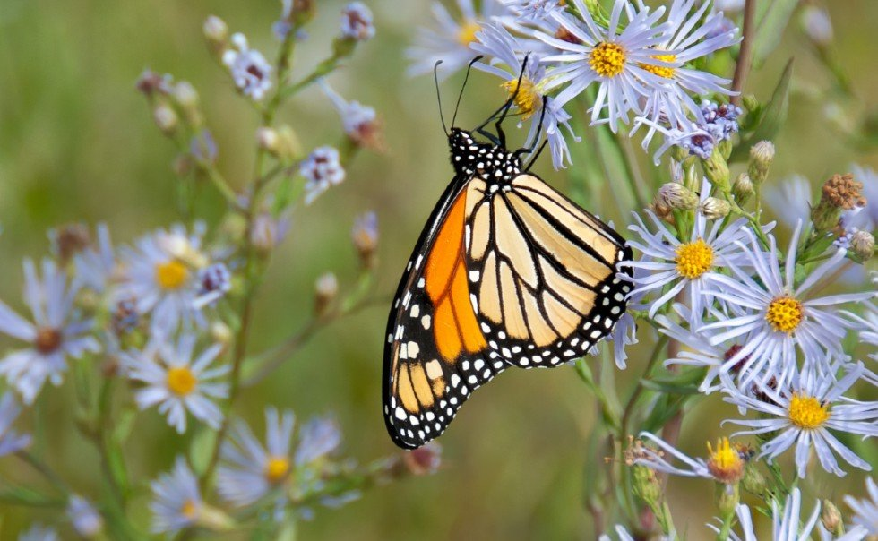 Butterfly - Therefore, if anyone is in Christ, he is a new creation. The old has passed away; behold, the new has come.